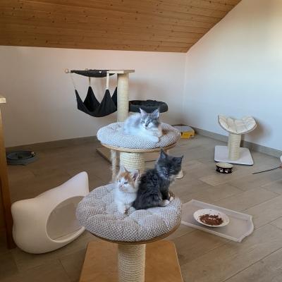 Kittenzimmer/Garten