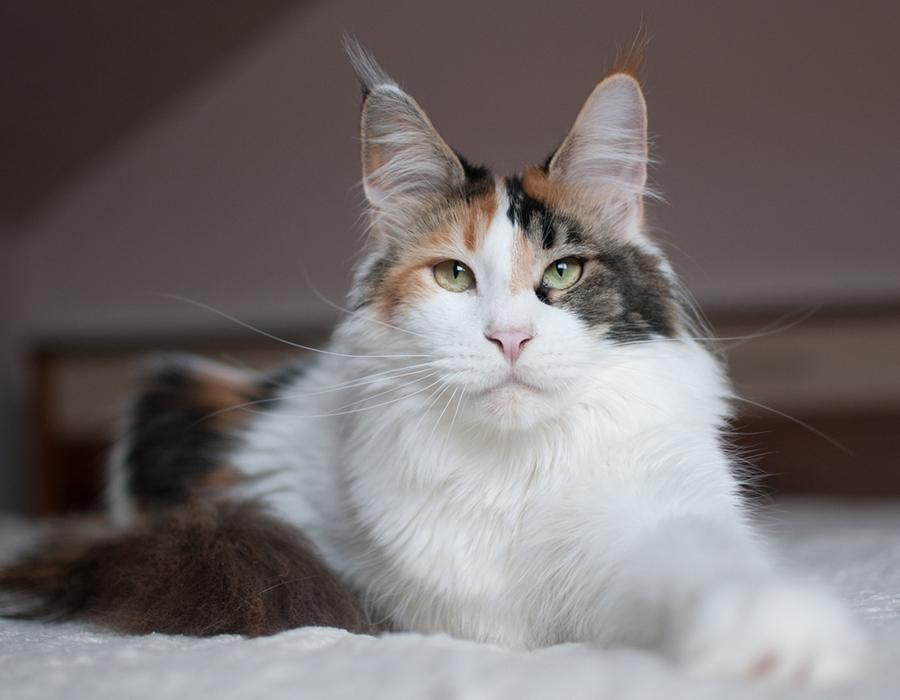 Katze Umi Naomi Neko Fujioka